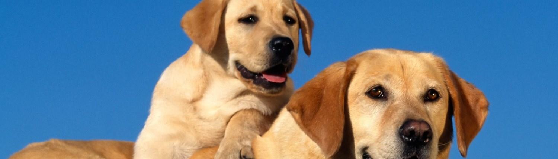 Kleurplaten Honden Labrador.Kleurplaten 24 Alles Gratis En Te Printen Een Tekenfeest
