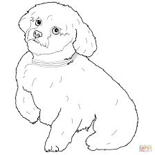 hond113