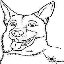 hond15