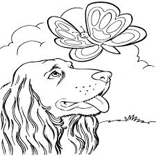 hond35