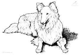 hond49