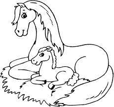 Paard101