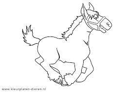 Paard105