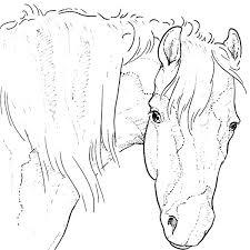 Paard111