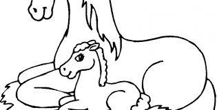 Paard115
