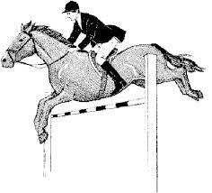 Paard117