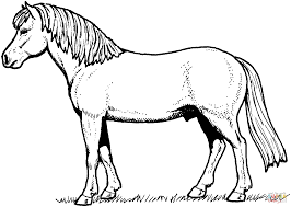 Paard119