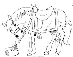 Paard13