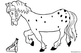 Paard15