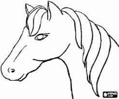 Paard19