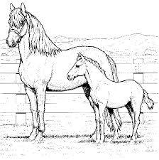 Paard31