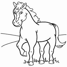 Paard33
