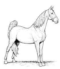 Paard41