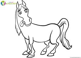 Paard43
