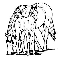 Paard49
