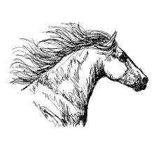 Paard5