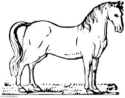 Paard57