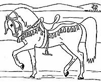 Paard61