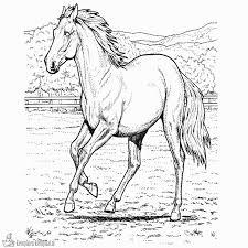 Paard69