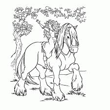 Paard71