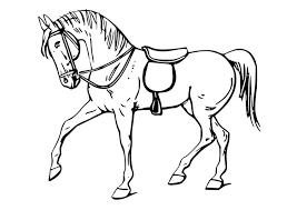 Paard73