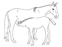 Paard75