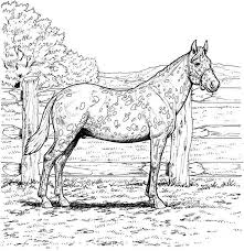 Paard79