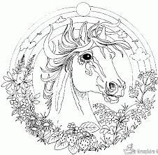 Paard89