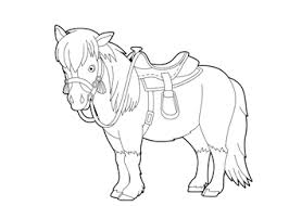 Paard99