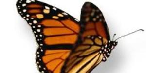Vlinder kleurplaat