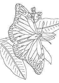vlinder100