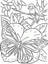 vlinder25