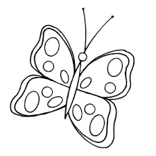 vlinder29