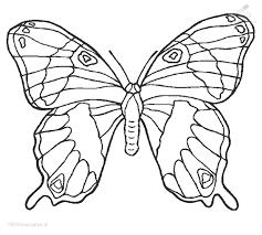 vlinder32