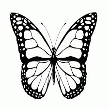 vlinder33