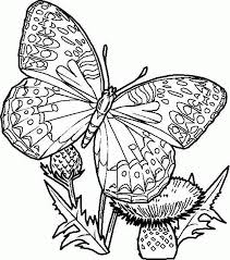 vlinder39