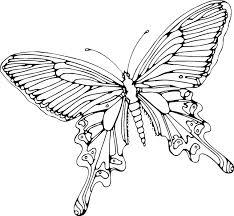 vlinder kleurplaat print de mooie platen dit mooie