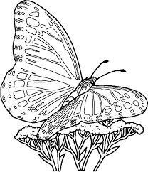 vlinder45