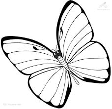 vlinder55