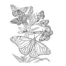 vlinder60
