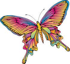 vlinder64