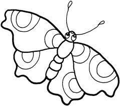 vlinder71