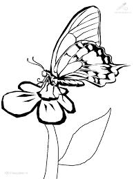 vlinder79