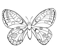Vlinder Kleurplaat Groot Archidev
