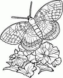 vlinder86