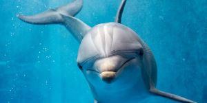 Dolfijn kleurplaat