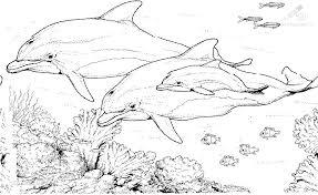 dolfijn13