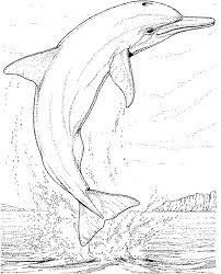 dolfijn20