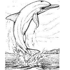 dolfijn22