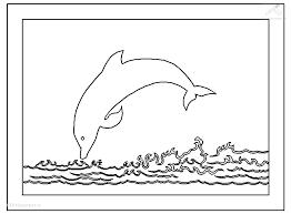 dolfijn23
